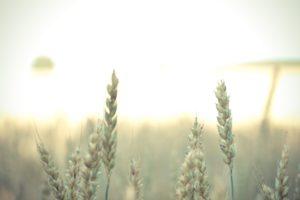 「小麦アレルギー」になった大人の気持ちの情景